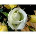 "s08r-004 ""Роза"""
