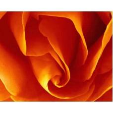 "s08r-006 ""Роза"""