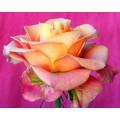 "s08r-011 ""Роза"""