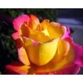 "s08r-013 ""Роза"""