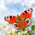 "Схема вышивки s02ba-001 бабочка  ""Павлиний глаз"""