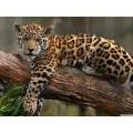 """Схема вышивки s02le-007 """"Леопард на дереве"""""""
