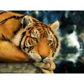 """Схема вышивки s02t-002 """"Тигр"""""""