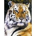 """Схема вышивки s02t-006 """"Тигр"""""""